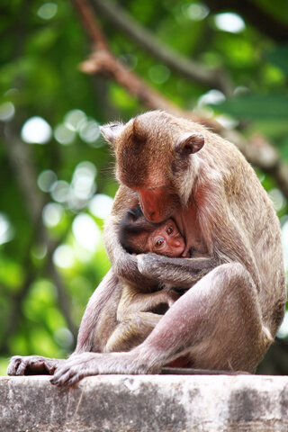Oxytocin and breastfeeding go together